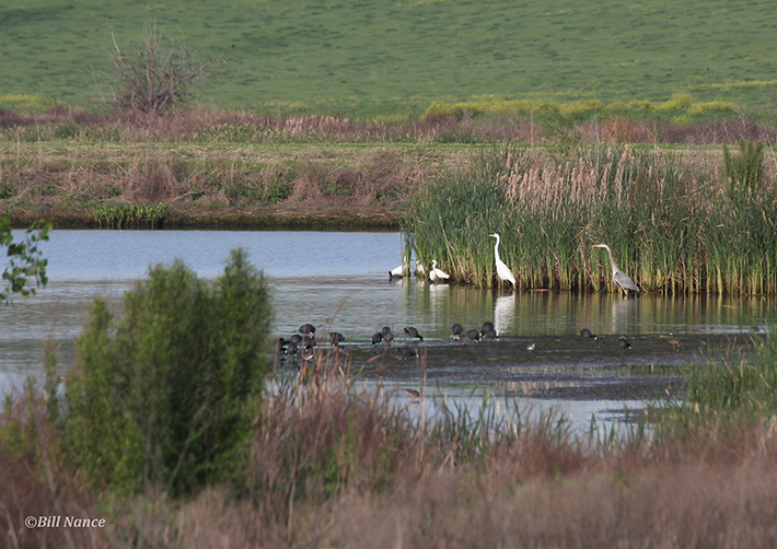 Birds in the Wetland